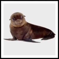 100 Pics Baby Animals Level 13