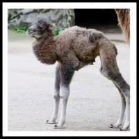 100 Pics Baby Animals Level 18