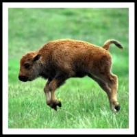 100 Pics Baby Animals Level 19