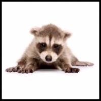100 Pics Baby Animals Level 23