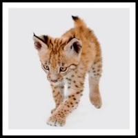 100 Pics Baby Animals Level 24