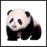 100 Pics Baby Animals Level 25