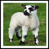 100 Pics Baby Animals Level 26