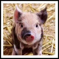 100 Pics Baby Animals Level 28