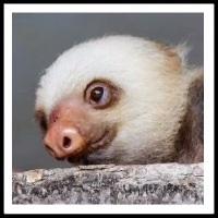 100 Pics Baby Animals Level 31