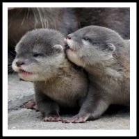 100 Pics Baby Animals Level 40