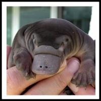 100 Pics Baby Animals Level 74