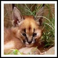 100 Pics Baby Animals Level 77