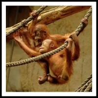 100 Pics Baby Animals Level 80