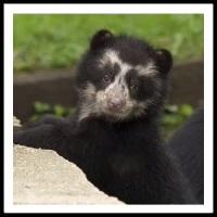100 Pics Baby Animals Level 81