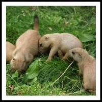 100 Pics Baby Animals Level 82