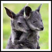 100 Pics Baby Animals Level 84