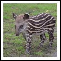 100 Pics Baby Animals Level 90