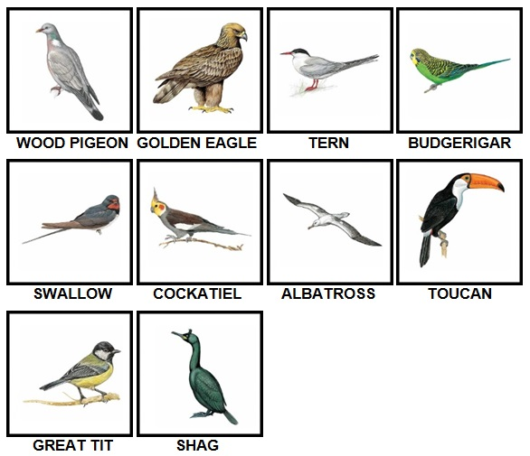 100 Pics Birds Level 11-20 Answers