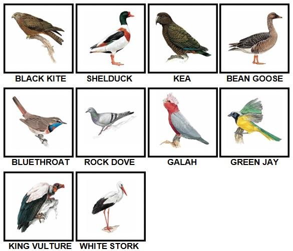 100 Pics Birds Level 41-50 Answers
