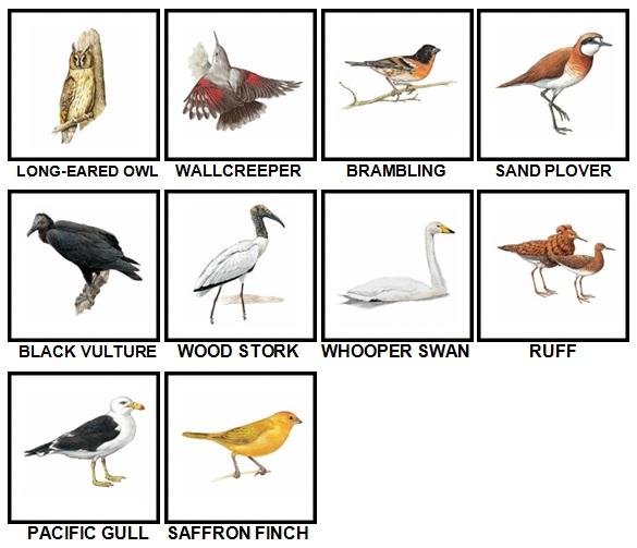 100 Pics Birds Level 51-60 Answers
