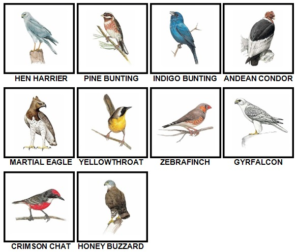 100 Pics Birds Level 61-70 Answers