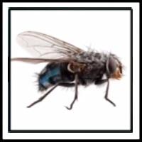 100 Pics Bugs Level 13