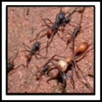 100 Pics Bugs Level 14