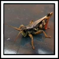 100 Pics Bugs Level 15