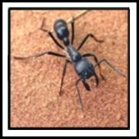 100 Pics Bugs Level 17
