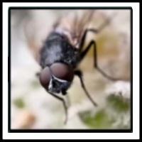 100 Pics Bugs Level 20