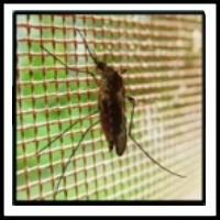 100 Pics Bugs Level 24