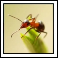 100 Pics Bugs Level 29