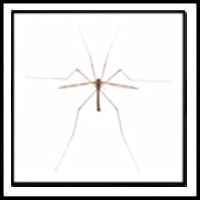 100 Pics Bugs Level 30