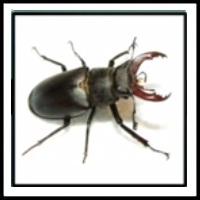 100 Pics Bugs Level 31