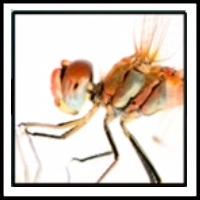 100 Pics Bugs Level 33