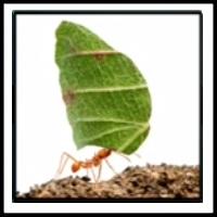 100 Pics Bugs Level 38