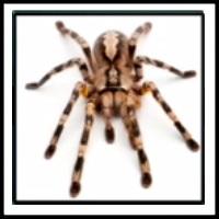 100 Pics Bugs Level 40