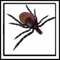 100 Pics Bugs Level 43