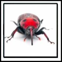 100 Pics Bugs Level 45