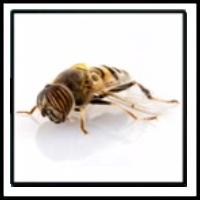 100 Pics Bugs Level 46