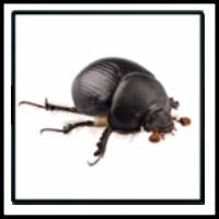 100 Pics Bugs Level 47