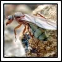 100 Pics Bugs Level 50