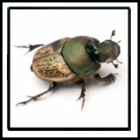 100 Pics Bugs Level 51