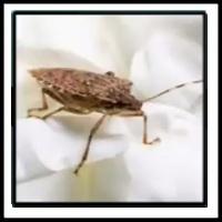 100 Pics Bugs Level 52