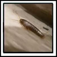 100 Pics Bugs Level 53