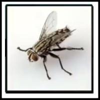 100 Pics Bugs Level 54