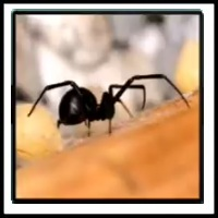 100 Pics Bugs Level 55