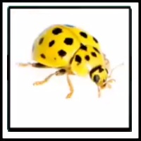 100 Pics Bugs Level 56