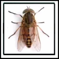 100 Pics Bugs Level 57