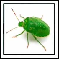 100 Pics Bugs Level 60