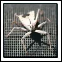 100 Pics Bugs Level 61