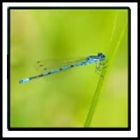 100 Pics Bugs Level 63