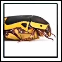 100 Pics Bugs Level 66
