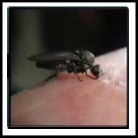 100 Pics Bugs Level 67